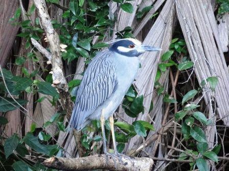 tortuguero-oiseau.jpg